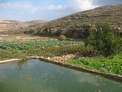 traditional-irrigation-system-palestine-wadi-fuqin-agriculture