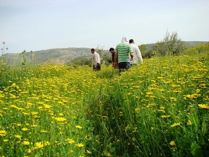 biodiversity, eco, park, jordan, preservation