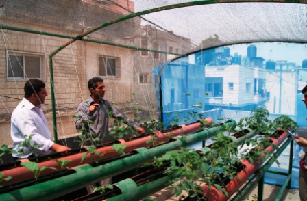 Turning Roofs Green With Vegetable Gardens Ecopeace Middle East