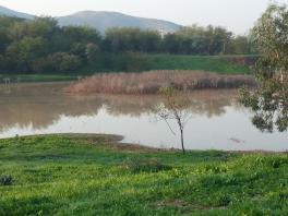 SHE Wetland