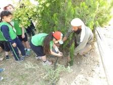 Auja_kids_planting_2