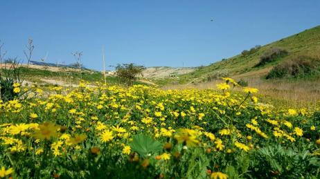 Jordan EcoPark Flowers